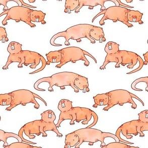 Medium Naked Mole Rats