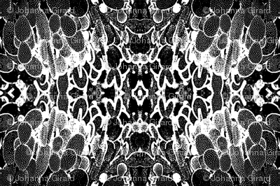 Black And White Prickly Pear Cactus Desert Fractal Kaleidoscope