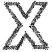 X-Season