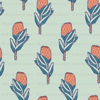 Protea Bulb - Tiny