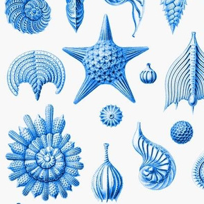Haeckel's Thalamphora sea shells blue