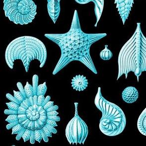 Haeckel's Thalamphora sea shells turquoise
