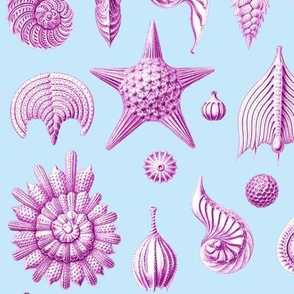 Haeckel's Thalamphora sea shells purple