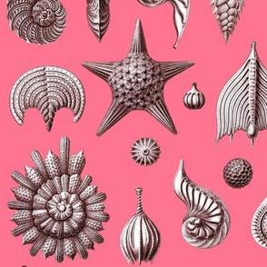 Haeckel's Thalamphora sea shells coral pink