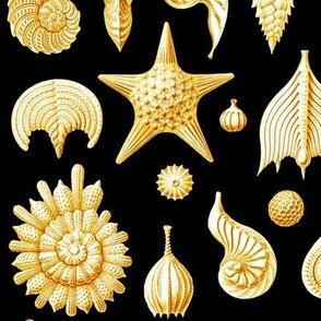 Haeckel's Thalamphora sea shells gold