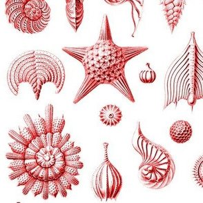Haeckel's Thalamphora sea shells red