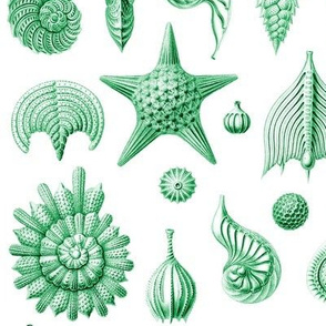 Haeckel's Thalamphora sea shells green