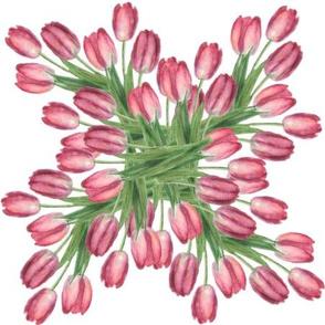 Tulips basic