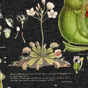 Carnivorous Plants - black