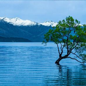 Wanaka Tree Large