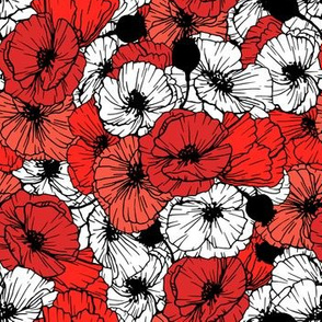 Contrast Poppy flowers in red, black and white colors