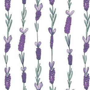 lavender field white