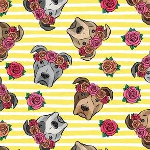 all the pit bulls - floral crowns -  yellow stripes