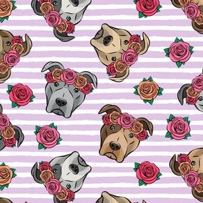 all the pit bulls - floral crowns -  purple stripes