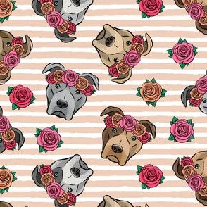 all the pit bulls - floral crowns -  blush stripes