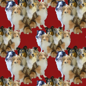 Sheltie Family red background