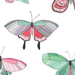 butterflies medium size