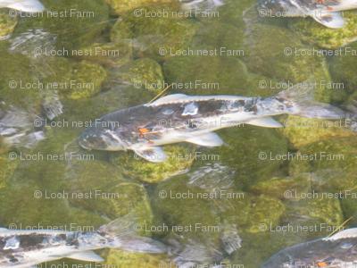Shady Koi | Seamless Underwater Photo Print