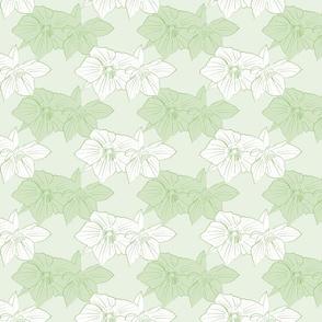 Green Hellebores