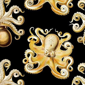 haeckel's octopus  black and gold