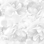 white rose repeat offset