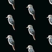 Kookaburra cutie