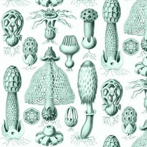 Haeckel's mushrooms celadon green