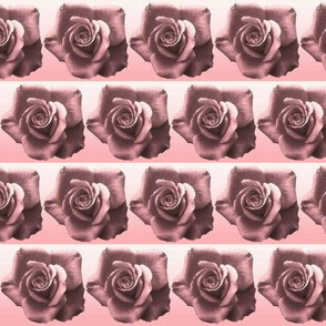 Brown Rose with Pink