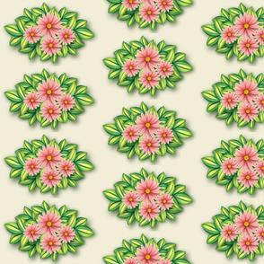 Pink daisies on Sweet Corn