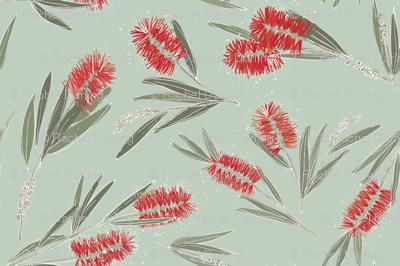 South Australian Bottlebrush in 'Mint'