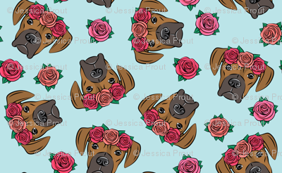 boxer  - floral crowns - fawn on blue