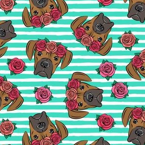boxer  - floral crowns - fawn on teal stripes