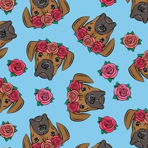 boxer  - floral crowns - fawn on  bright blue