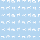 Flock of Lambs  in Blue