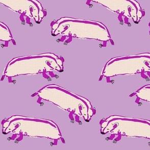 badger_5