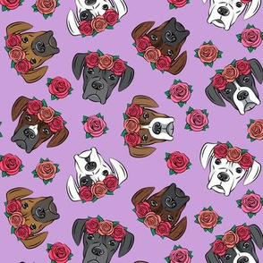 all the boxers with floral crowns - purple