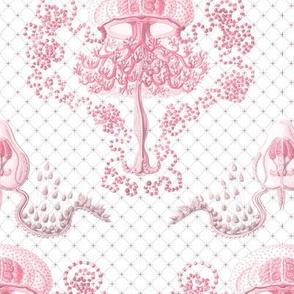 Haeckel's jellyfish  damask pink