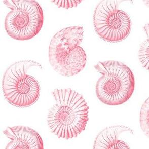 Haeckel's nursery nautilus pink