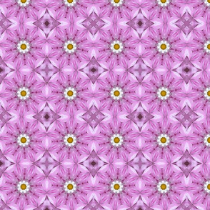 Pink and Daisies 1259