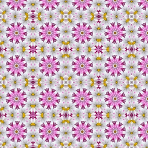 Pink and Daisies 1266