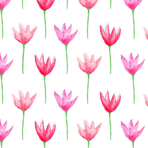Tulips Watercolor Pinks on White