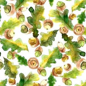 watercolour acorns