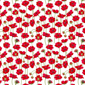 red botanic white background