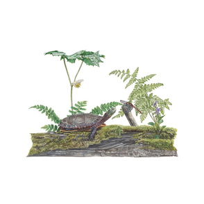 2018 turtle and ferns pillow