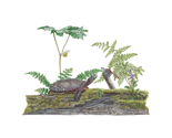 R2018-turtle-and-ferns-pillow_thumb