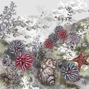 anemones_rockpool_placement