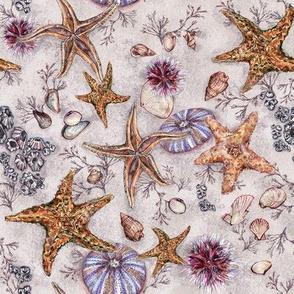 rockpool_starfish
