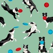 Rborder-collie-disc-dog-2_shop_thumb