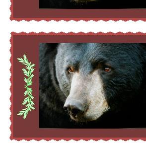 boarder bear