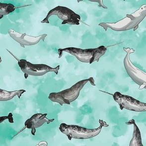 Narwhal and Belgua Whales on Aqua